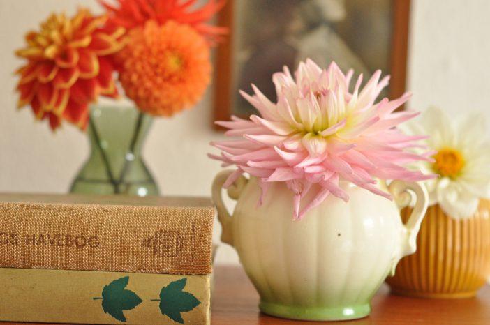 En enkelt dahlia i vase