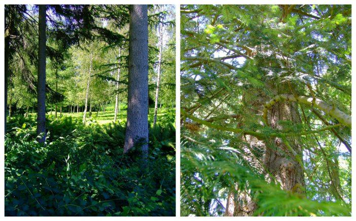 Haven på Langebækgård