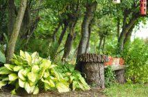 Skovbed med træstub og hosta