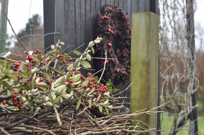 Udendørs juledekoration med tang og bær