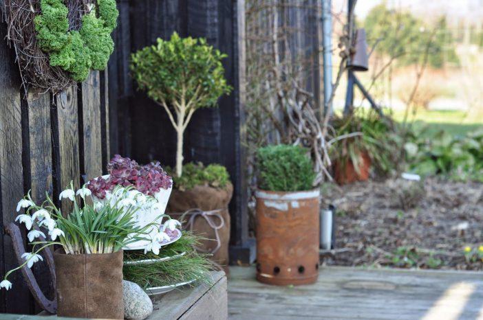 Genbrug i haven - En forårsdekoration med krukker og tallerkner