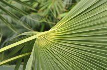 Palme i Palmehuset