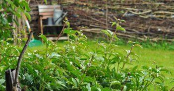 Haven dugfrisk og grøn efter regnen