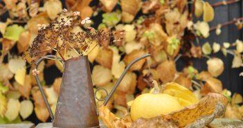 Efterårsdekoration med hostablad og græskar