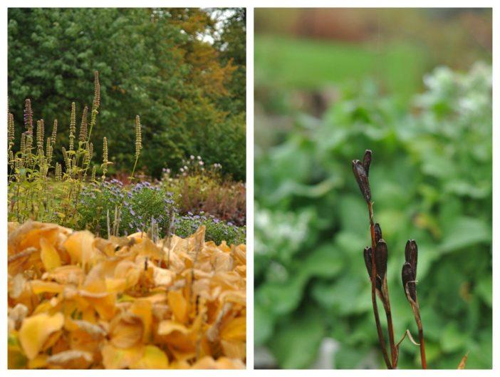 Efterårsplanter med smukt løv og frøstande