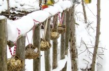 Frø og æbler til fuglene