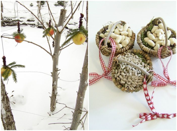 Æbler, frø og nødder til fuglene