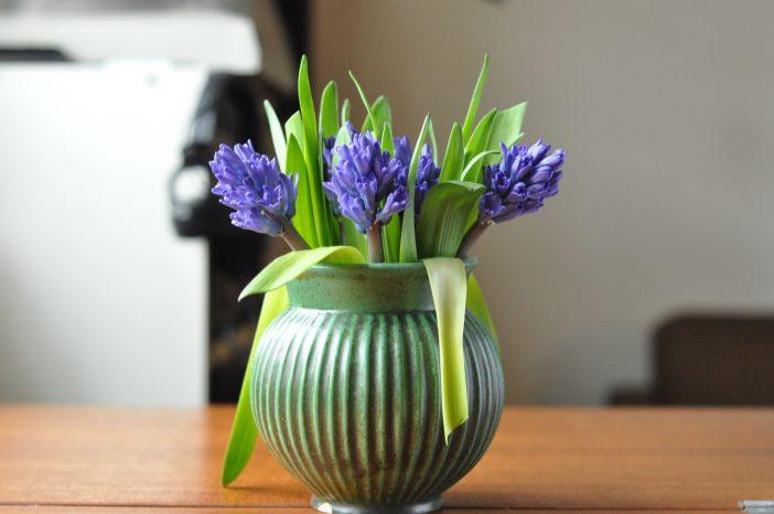 Glæder i januar - en buket hyacinter