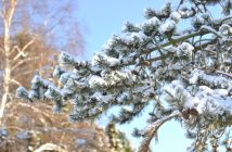 Sne og sol i januar
