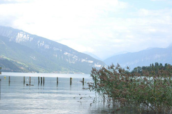 Thunersee med bjergene i baggrunden