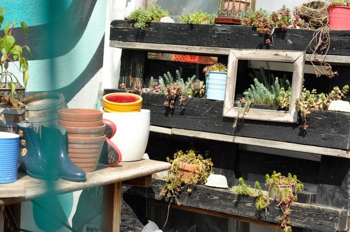 Genbrugsideer med indramning af en plante ved brug af en gammel billedramme