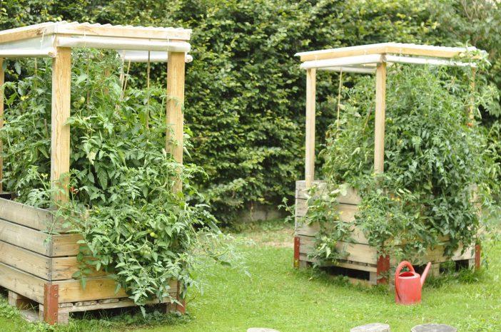 Minidrivhus - også kaldet et tomathus - med tag af pvc tagplader og sider af kraftigt plast
