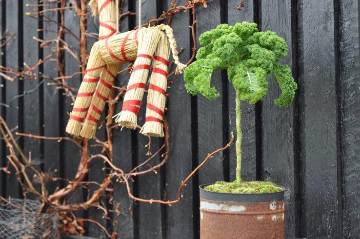 Juletræ af grønkål i en rusten grillstarter