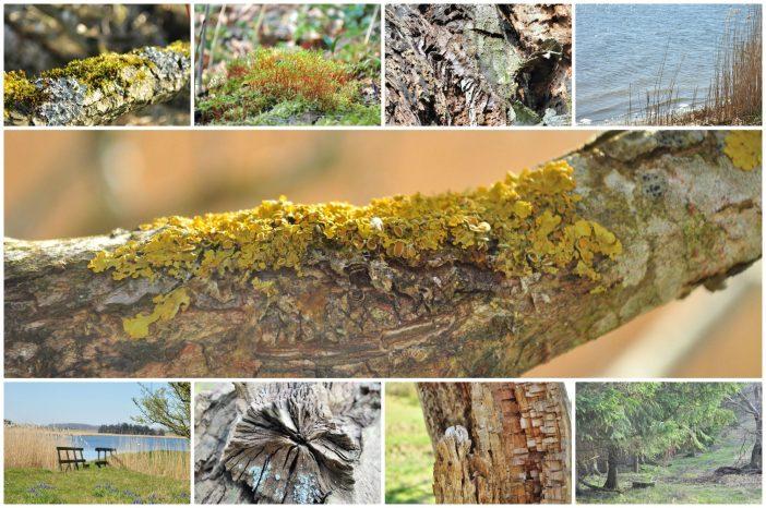 Urørte naturområder med stor biodiversitet